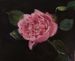 F  Spring Rose 2